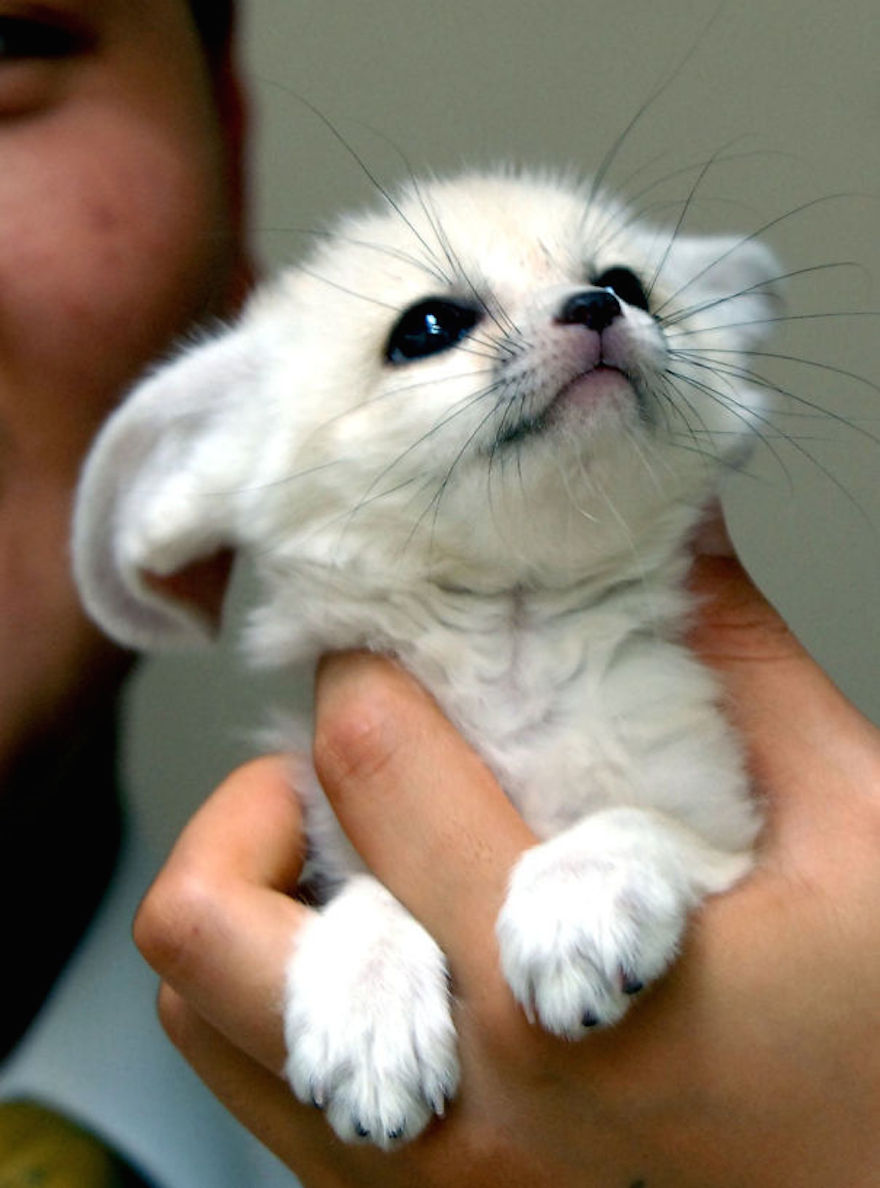 baby-fox_cute-animals