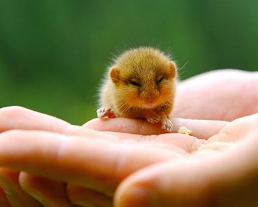 baby-mouse_cute-animals
