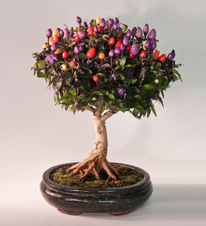 bonsai-trees_v12