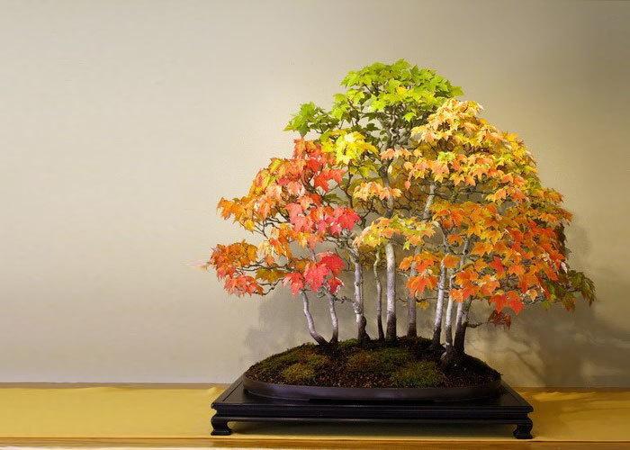 bonsai-trees_v14