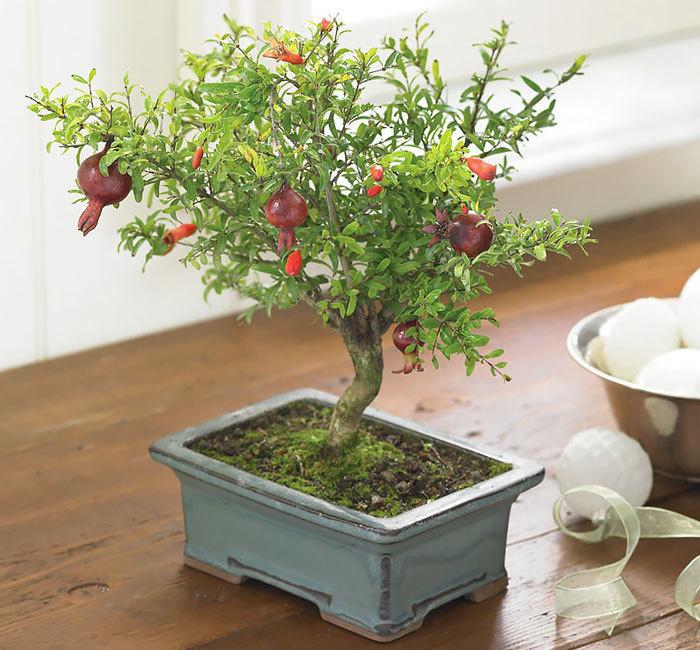 bonsai-trees_v15