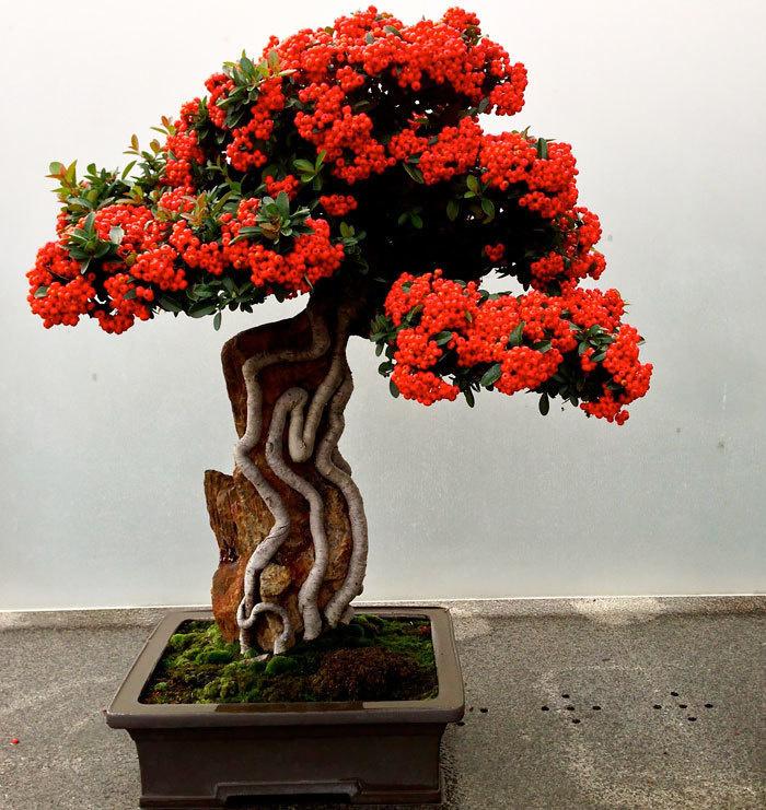 bonsai-trees_v16