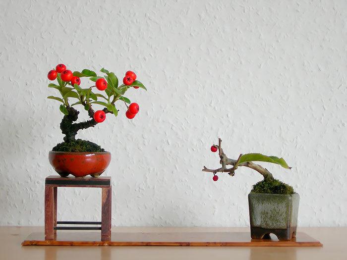 bonsai-trees_v17