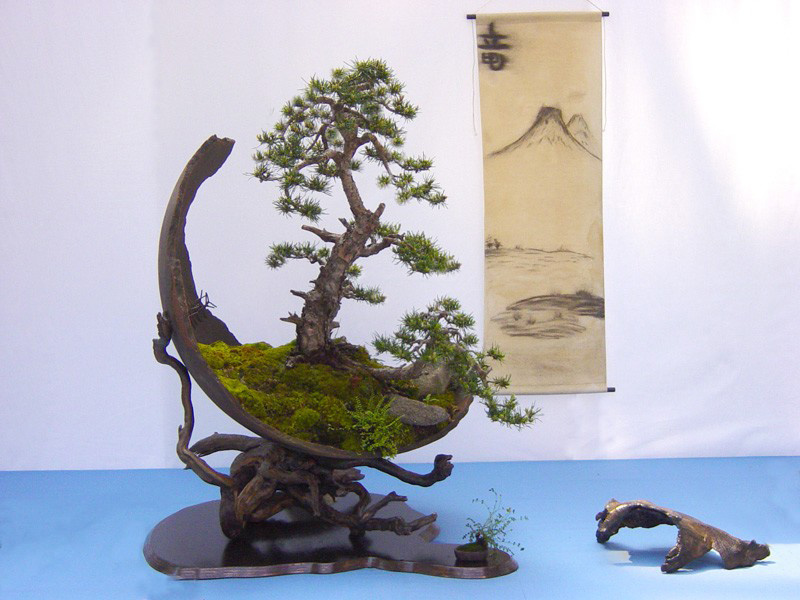 bonsai-trees_v18
