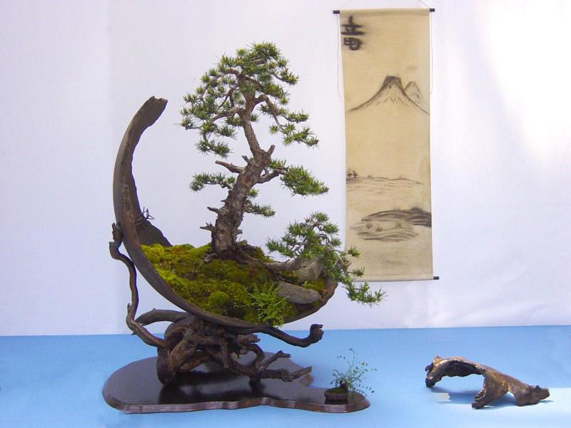 bonsai-trees_v18