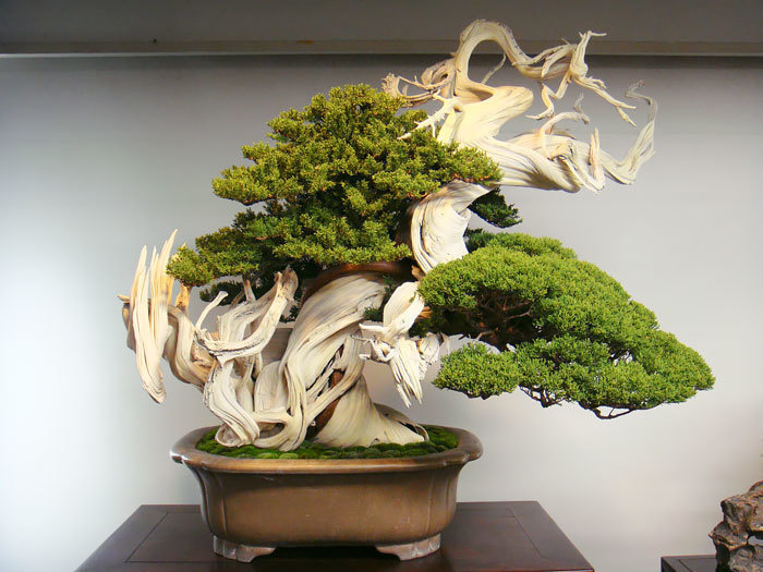 bonsai-trees_v3