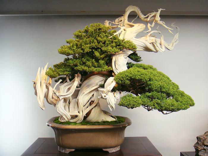 bonsai-trees_v3