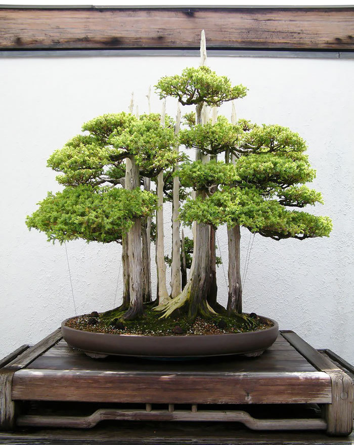 bonsai-trees_v5
