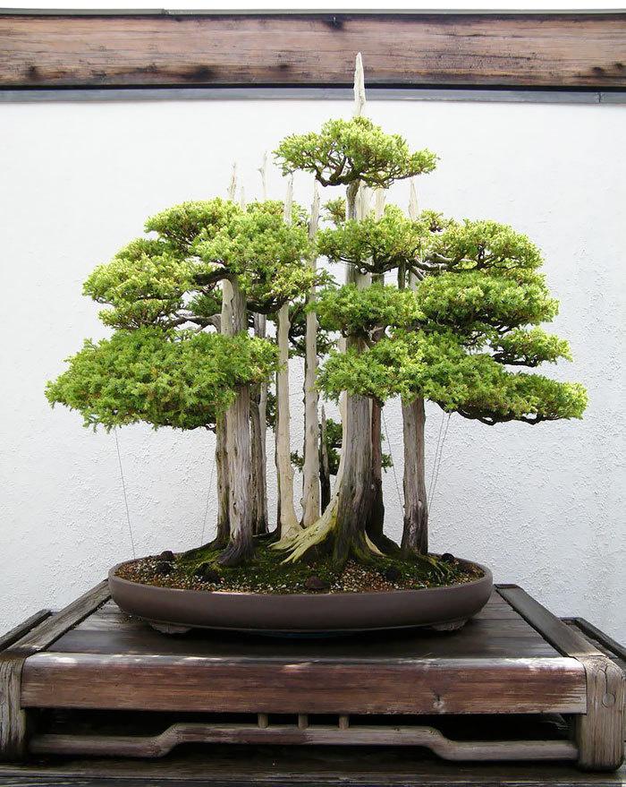 bonsai-trees_v5
