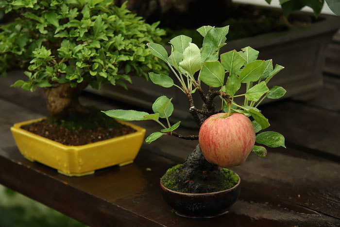 18 Stunning And Very Rare Bonsai Trees That Are Out Of This World