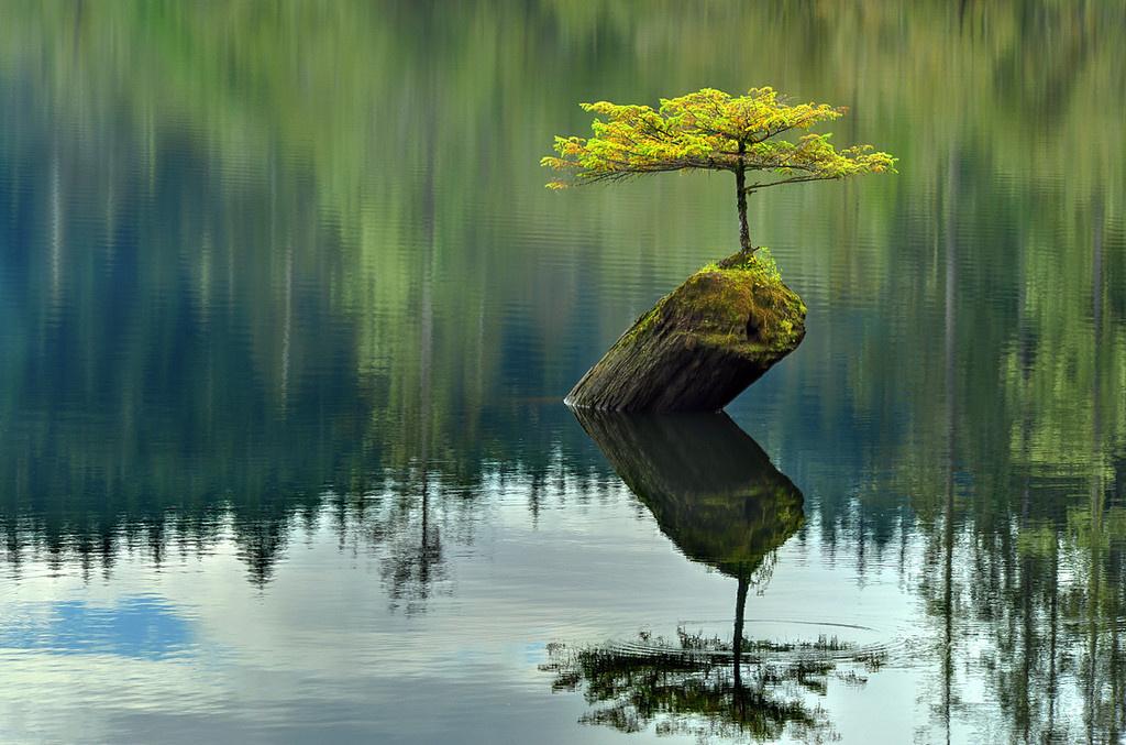 bonsai-trees_v9
