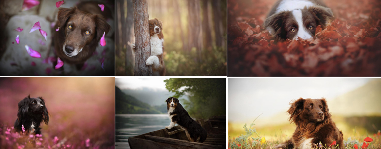 15 Amazing Images Of Dogs Taken By A Woman Photographer To Showcase Love For Her Pet