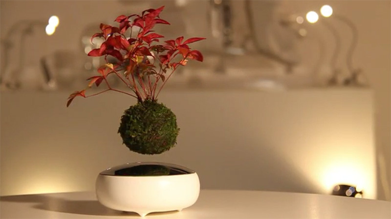 floating-bonsai-tree_home-decor-gifts