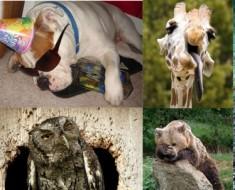 hilarious-photos-hungover-animals