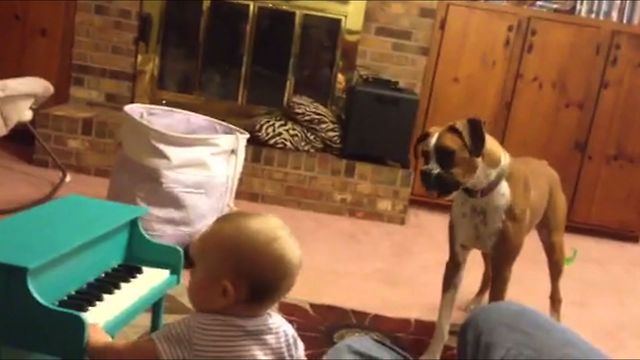 Too Unique Musical Band! This Dog And Charming Baby Make The Cutest Music Together