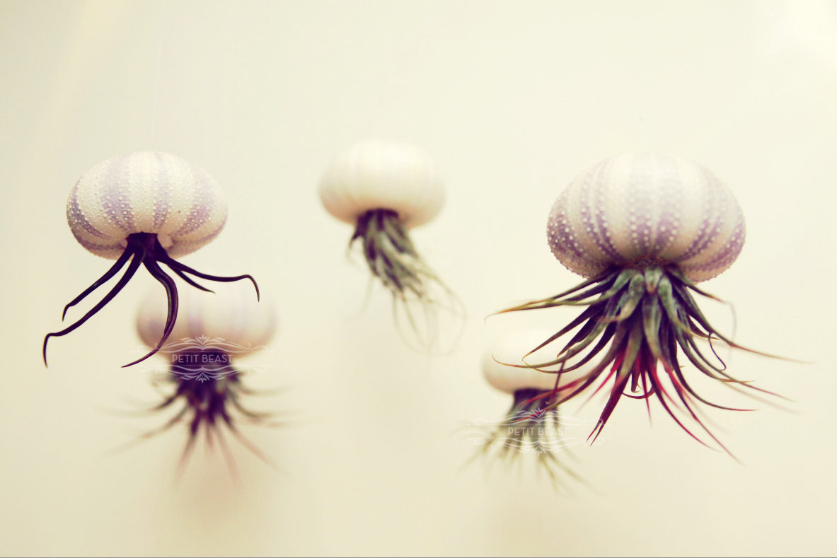 jellyfish-air-plants_home-decor-gifts