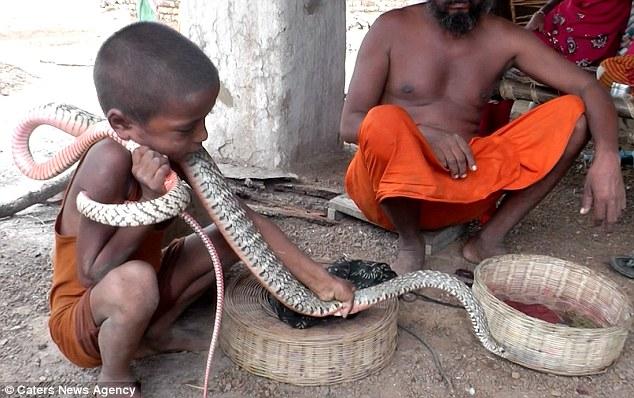 king-cobras_v2