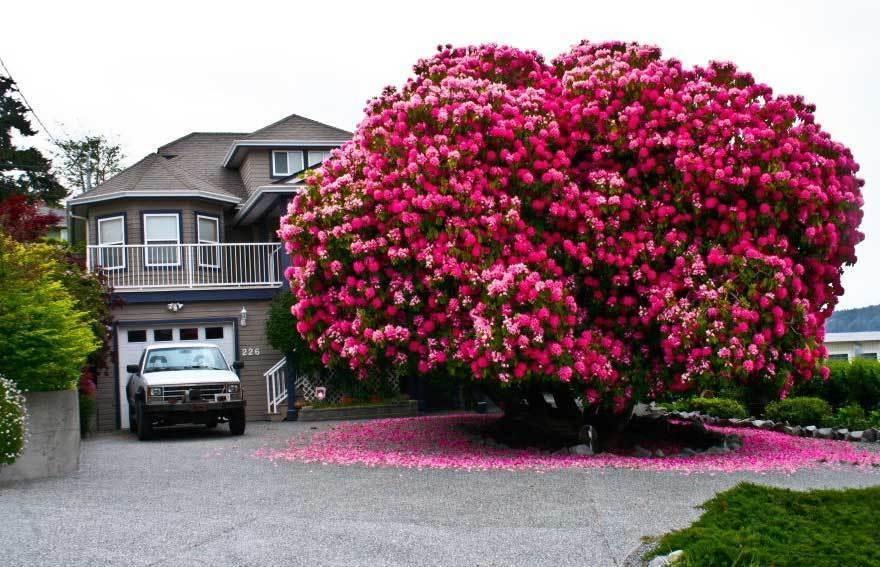 magnificent-trees_v1