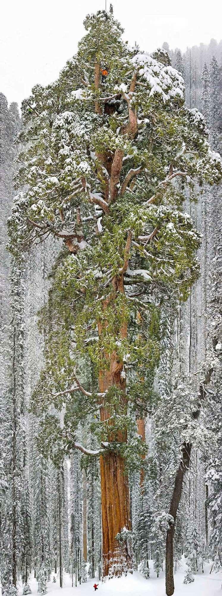 magnificent-trees_v10