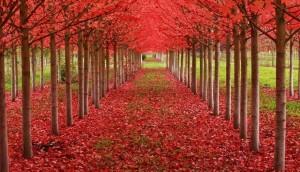 magnificent-trees_v11