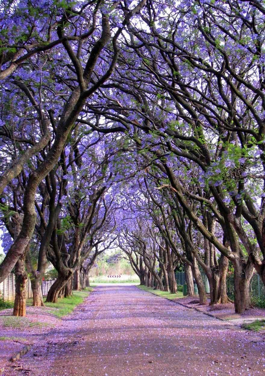 magnificent-trees_v13