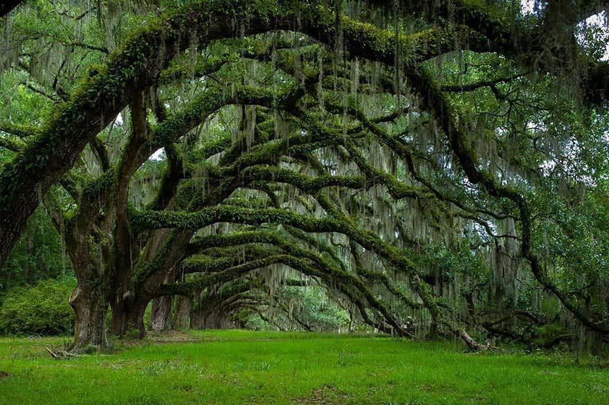 magnificent-trees_v14
