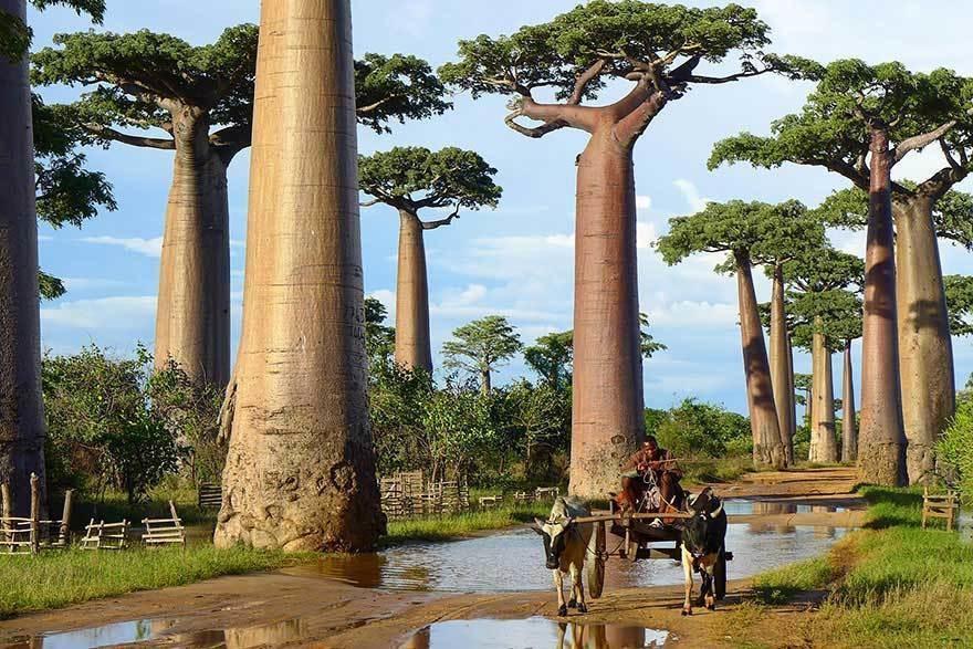 magnificent-trees_v15