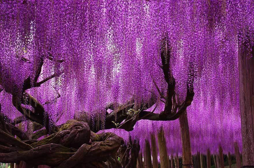 magnificent-trees_v2
