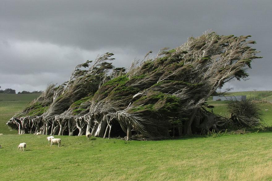 magnificent-trees_v3