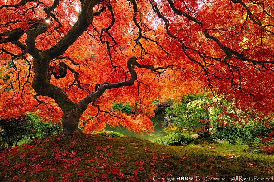 magnificent-trees_v4
