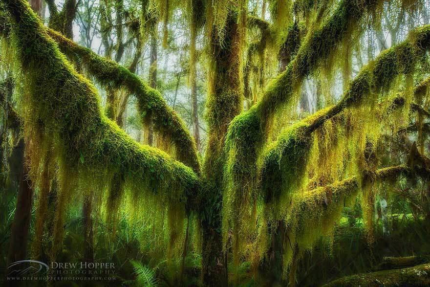 magnificent-trees_v5