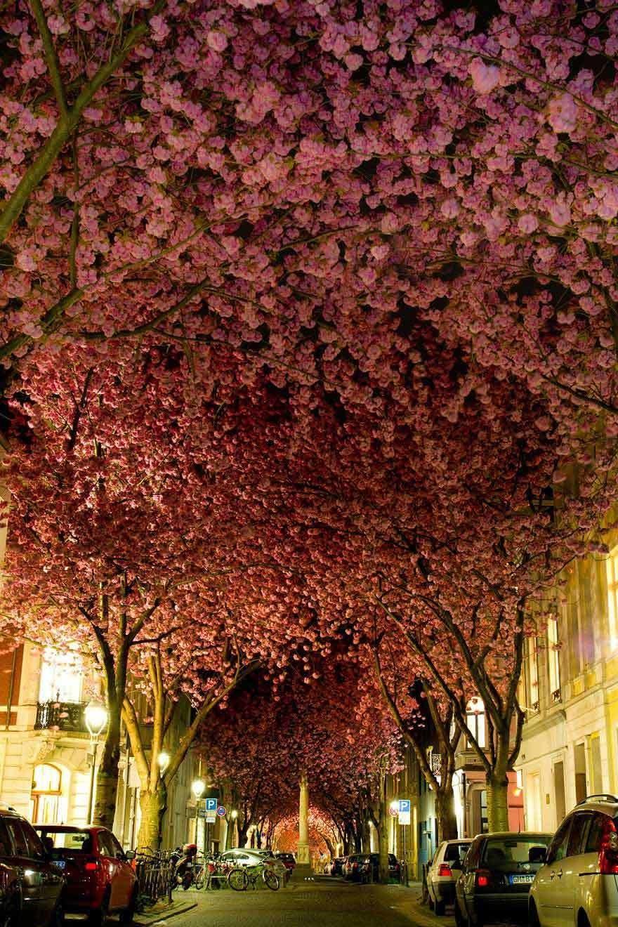 magnificent-trees_v6