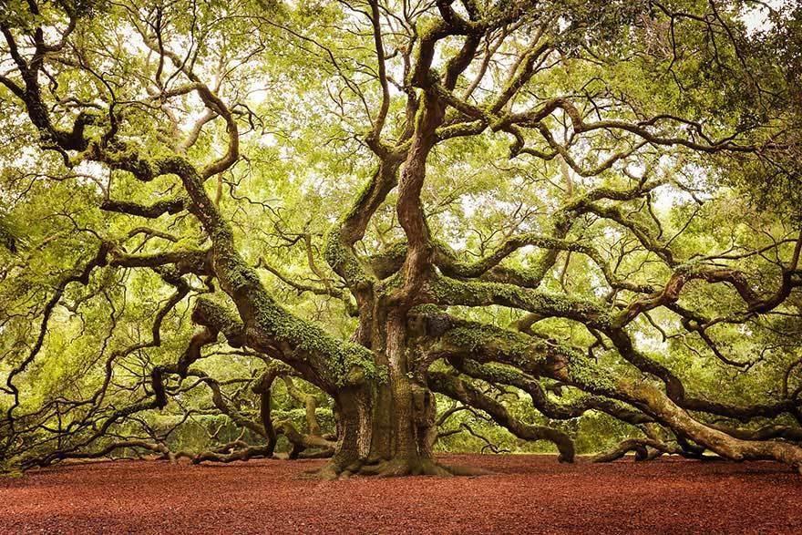 magnificent-trees_v7