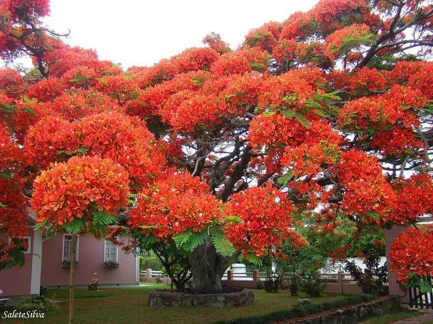 magnificent-trees_v8