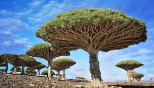 magnificent-trees_v9