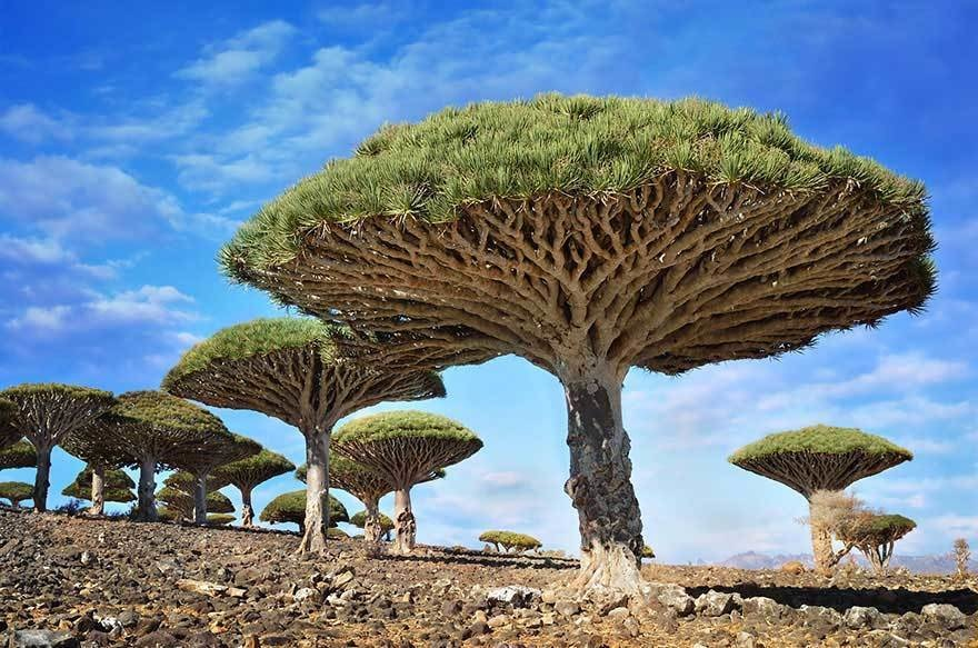 15 Of The Most Magnificent Trees In The World. #12 Is Just Mind Blowing