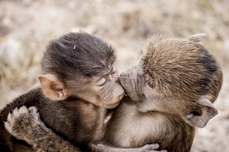 playful-animals_v5