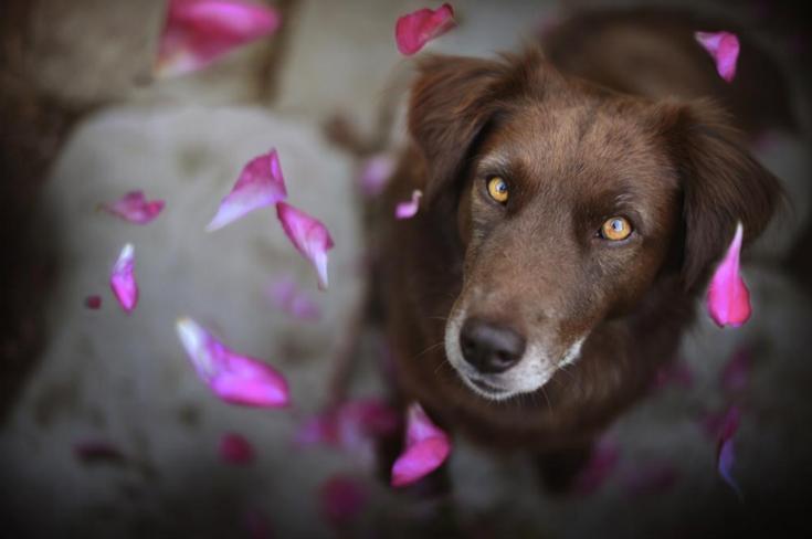 stunning-dog-photos_v1