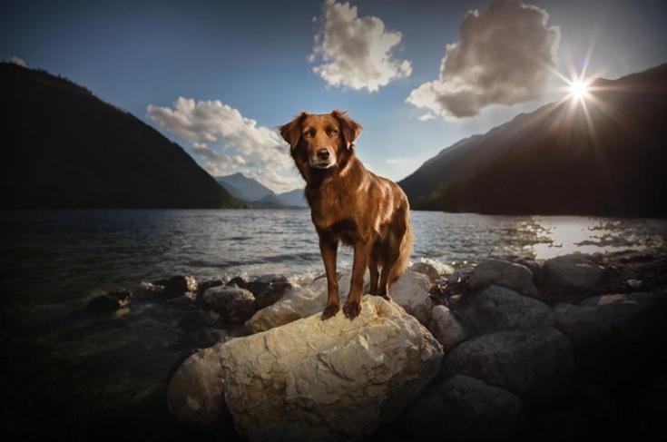 stunning-dog-photos_v11