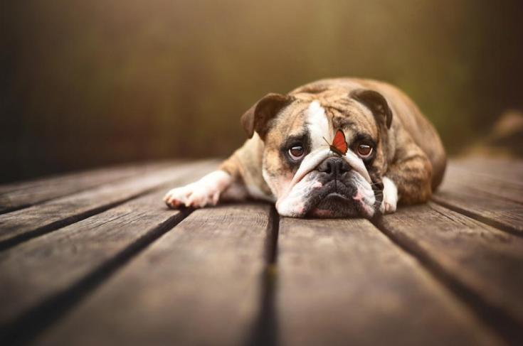stunning-dog-photos_v13