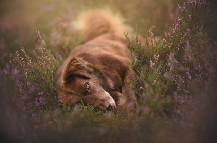 stunning-dog-photos_v14