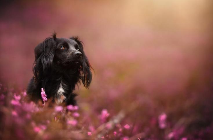 stunning-dog-photos_v15