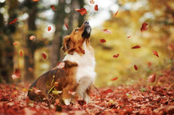 stunning-dog-photos_v2