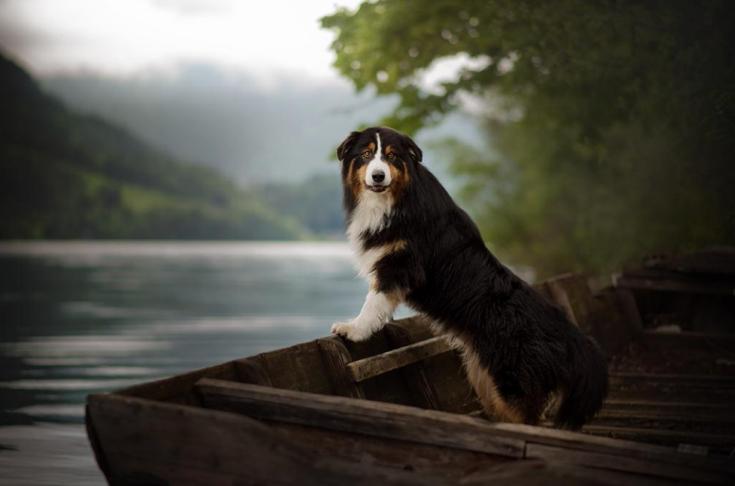 stunning-dog-photos_v3