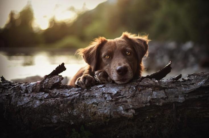 stunning-dog-photos_v4