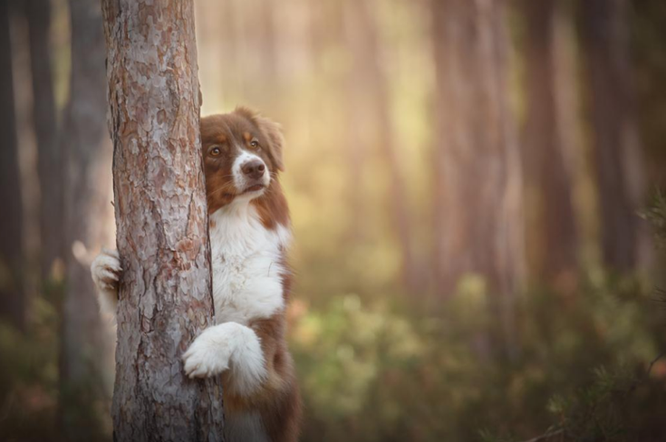 stunning-dog-photos_v6