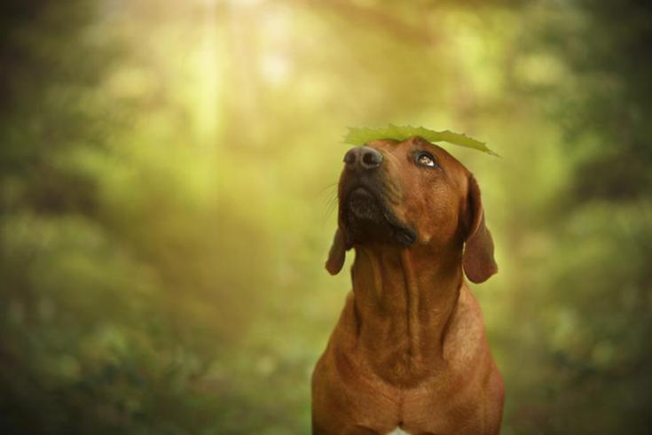 stunning-dog-photos_v8