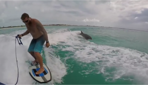 wakesurfing-with-a-dolphin