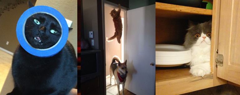 20 Hilarious CAT GIFs Where They Tried So Hard And Failed Miserably