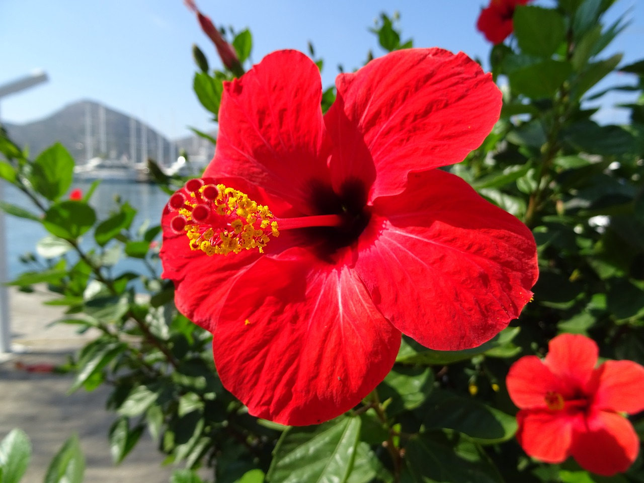 Sipping Some Hibiscus to reduce Hypertension